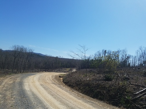 logging roads.jpg